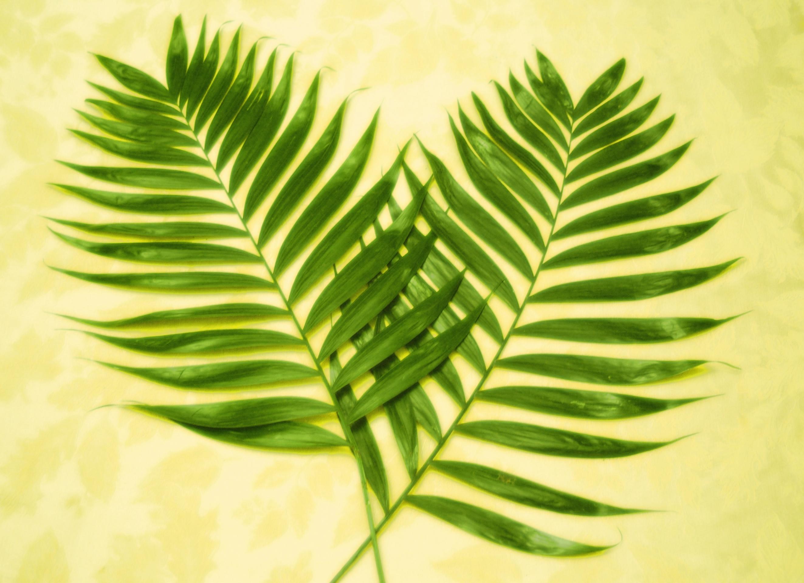 palm sunday - photo #22