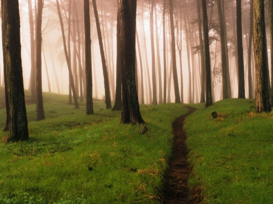 forest-path-1024-768-5438