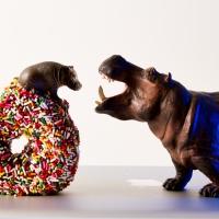 Sidewalk Flowers: Doughnut Holes and Hippopotami